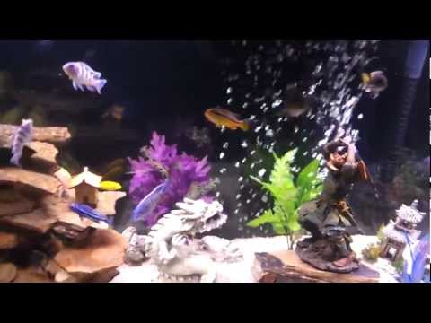 Oriental / Asian theamed aquarium, fish tank, 55 gal.