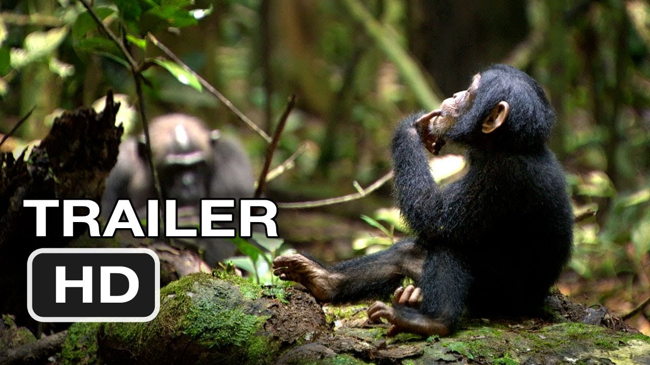 Baby Chimpanzee moreover Disneynature Chimpanzee furthermore I Fell In Love With A Chimp Review Of Disneynatures Chimpanzee furthermore An Ironic Father Son Story Irl further Watch. on oscar chimp movie
