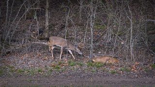 Deer Hunting Q & A: Should I leave the stand early to move a down doe? (#3QA) @GrowingDeer.tv