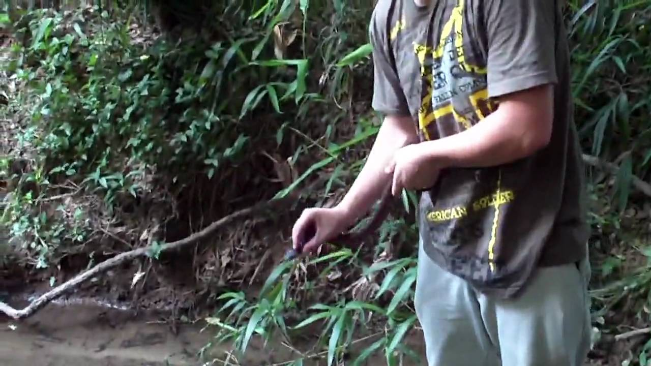Do Cottonmouths Water Moccasins Want To Bite And Kill
