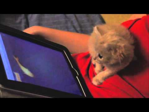 Cute Cat plays on iPad