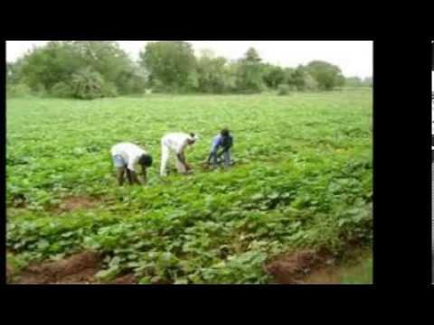 Rohingya Song  Jafar Bai 443a video