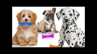 Animals Colors  | +More Nursery Rhymes & Learn Colors With  Animals