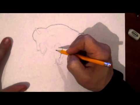 Видео как нарисовать зубра поэтапно
