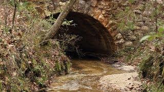 Apalachicola River Walk: EcoAdventures North Florida