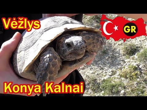 Turkija - Maudynės, vėžliai, slėnis - Išvyka į kalnus! || Gyvenimo Ritmas