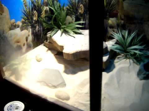 Home Made Bearded Dragon Enclosure/Tank