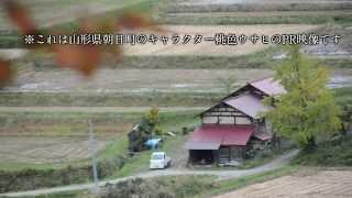 ゆるキャラグランプリ2013 山形県朝日町「桃色ウサヒ」PR動画