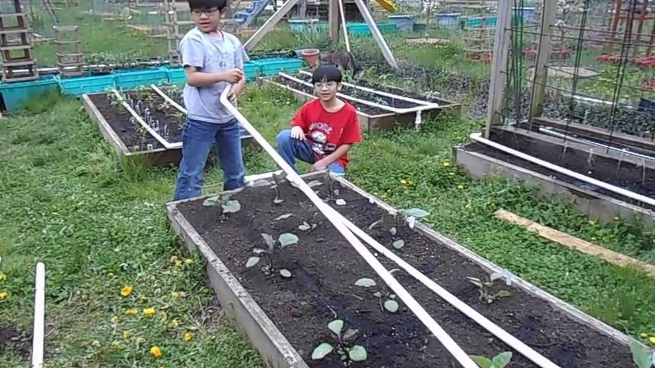 Drip Irrigation Sytem For Backyard Garden YouTube