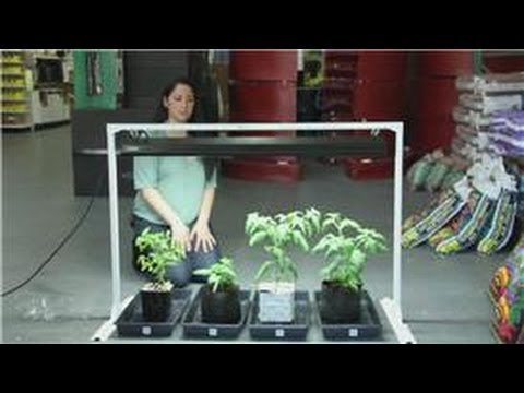 Tomatoes And Indoor Vegetable Gardens Easy Ways To Grow
