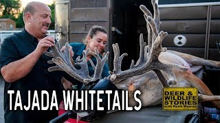 Gunslinger, a Living Legend at Tajada Whitetails | Deer and Wildlife Stories