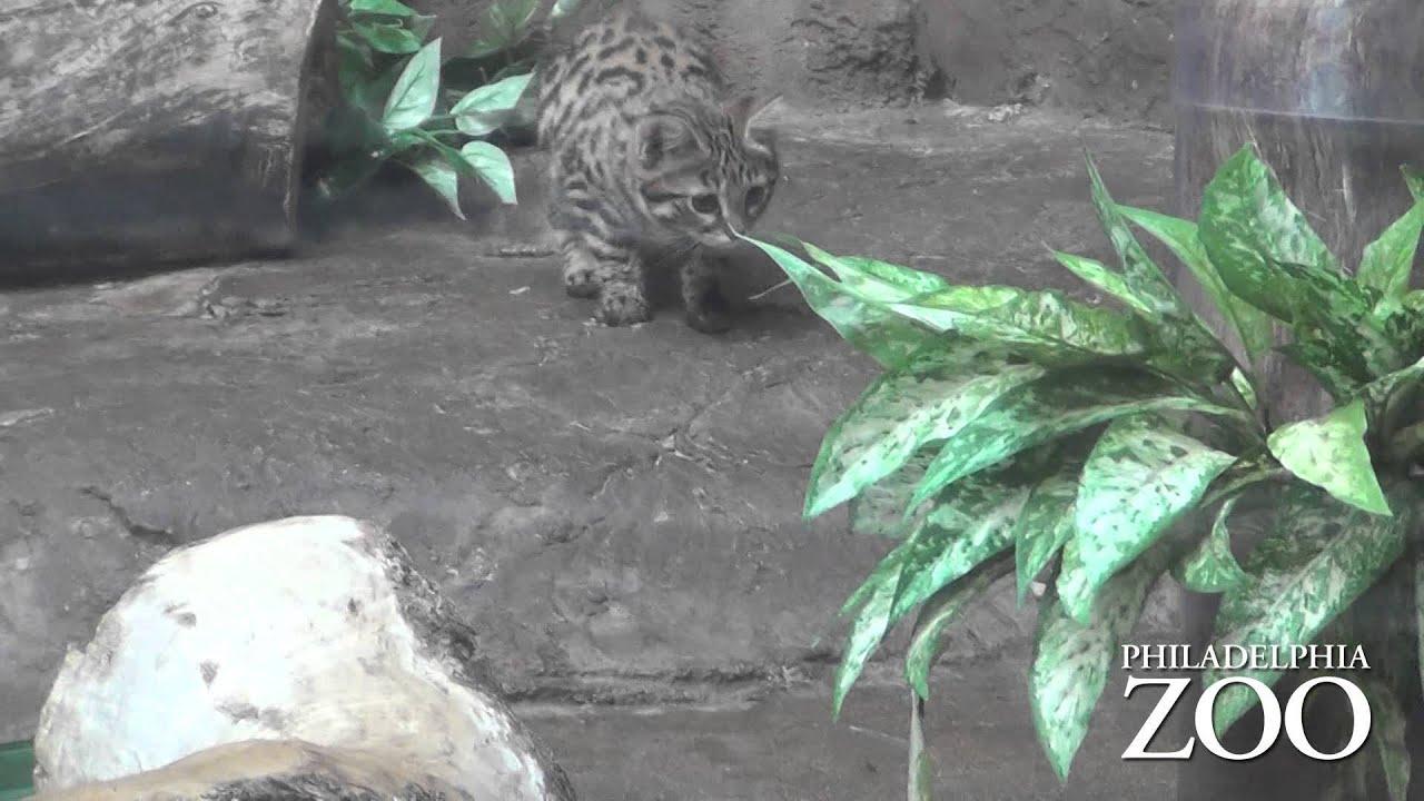Cat enrichment feeder
