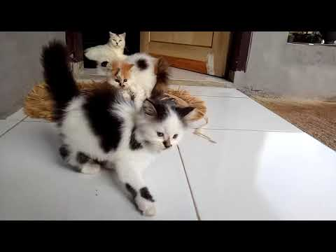 My funny baby cats learn fighting techniques at home