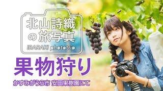 【北山詩織の旅写真】秋の果物狩り かすみがうら市 安田果樹園