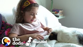 Little Girl And Guinea Pig Are The Cutest Pen Pals | The Dodo Reunited Season 2