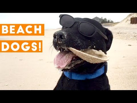 Funniest Dogs at the Beach Compilation 2018 | Funny Pet Videos