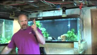 Today in the Fishroom ~ making a Photo Tank.wmv