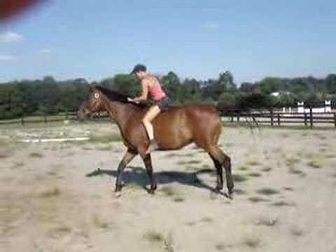 bareback mount