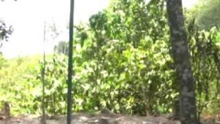 CASAS EN VENTA   EN EL SALVADOR 713-777-2980 (www.inveramarcorp.com) QUINTAMAYA