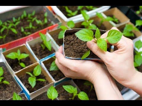 Дачные идеи Куда посеять семена на рассаду