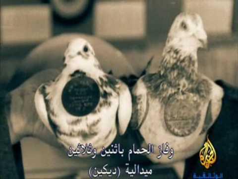 الطيور المحاربة بالحرب العالمية 1