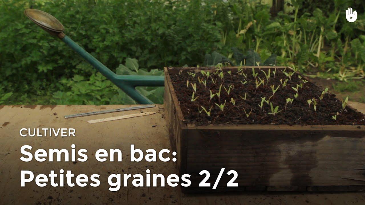 Semis en bac petites graines 2 2 youtube - Bac a semis ...