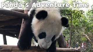 Adventure With Po's Elder Baby | iPanda