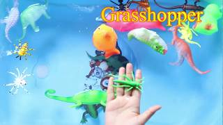 Learn Sea Animals Name - Wild - Insects Animals Name Like Dino Spider Frog Ant and More Animal