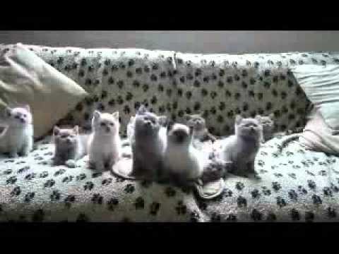 Котята поднимающие настроение на 100% !!