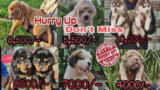 Dog Market Part -2...with phone number and address  8813825366, DOGGYZ WORLD