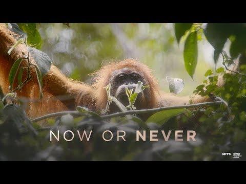 Download  Now Or Never 2019  Indonesian Trailer Gratis, download lagu terbaru