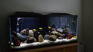 African Cichlids | Mbuna Stripping | Demasoni & Yellow Labs | Water Change | Breeding Colony