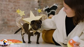 This Dog is Celebrating Halloween with Her New Forever Family in Style | The Dodo