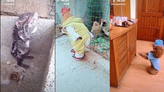 Funny Animal Videos 2019 (TikTok)