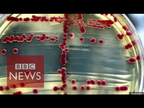What is a superbug? BBC News