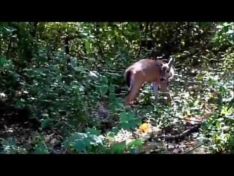 Fawn Release October 2015 Fox Valley Wildlife Center