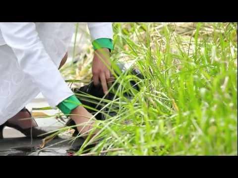plantas que producen corriente, un sueno que cobra vida