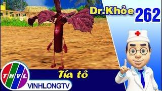 THVL | Dr. Khỏe – Tập 262: Tía tô - Phần 2