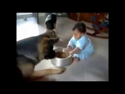 Самые смешные видео про людей, детей и животных!