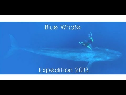 Blue Whale Exploration-sri Lanka video