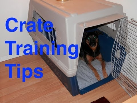 Crate Training Tips For Dog Training video