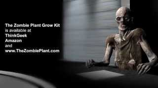 How to grow The Zombie Plant - ZOMBIE PLANT