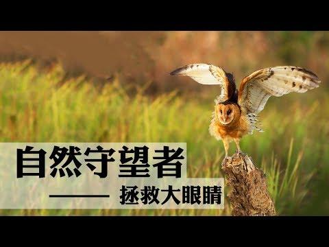 中國-自然守望者S3