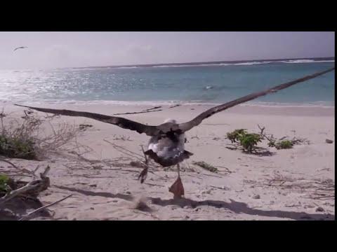 Ilha de Midway , Oceano Pacifico Norte, Inacreditável!