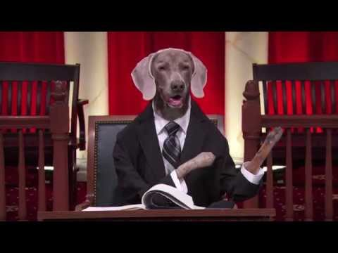 supreme court dogs last week tonight florida v