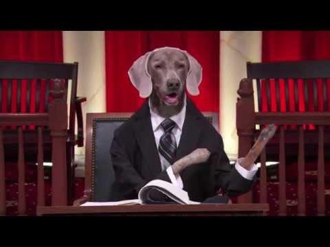 Supreme court dogs last week tonight florida v for Florida v jardines