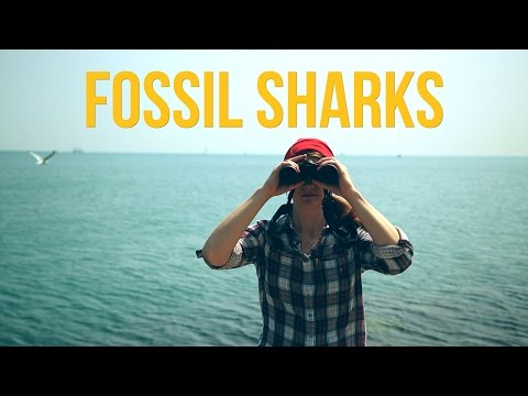 Fossil Sharks
