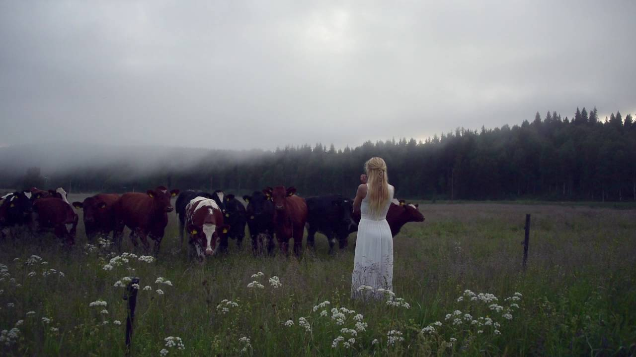 Beautiful Moment Woman Sings Ancient Swedish Song To Call The Cows Home