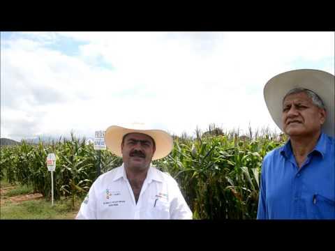 Secam y Unach Villaflores impulsan El Centro Agropecuario de Transferencia Tecnológica San Ramón Fra