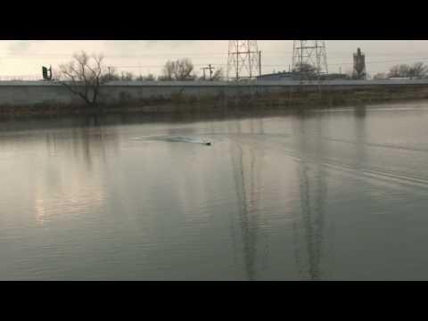 RC Boats - Pro Boat BlackJack 26 Brushless (HD-720p)